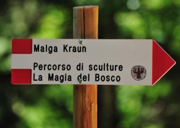 La Magia del Bosco. Rif. Malga Kraun. Foto A. Ceolan